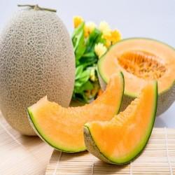 Hales Best Jumbo Cantaloupe (Cucumis melo)