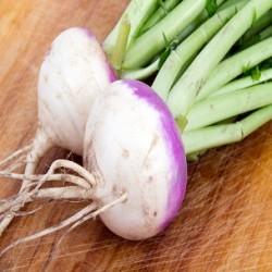 Purpletop White Globe Turnip