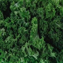 Siberian Kale (Brassica napus pabularia)