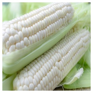 Stowell's Evergreen Corn (White)