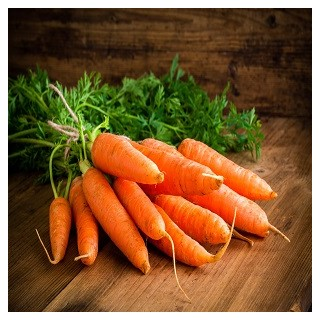 Danvers Carrot (Daucus carota var. sativus)
