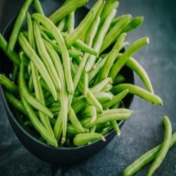 Provider Bush Bean (Phaseolus vulgaris)