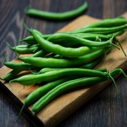 Blue Lake Pole Bean ( Phaseolus vulgaris)