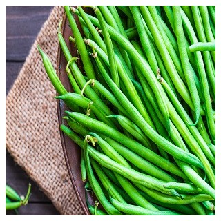 Kentucky Wonder Pole Bean (Phaseolus vulgaris)