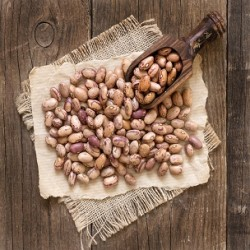 Bush Mexican Pinto Bean (Phaseolus vulgaris)