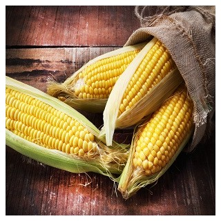 Golden Bantam Sweet Corn (Zea mays)