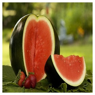 Sugar Baby Watermelon (Citrullus lanatus)